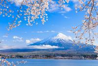 河口湖のサクラと富士山