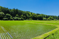 水田と里山と青空 10158006683| 写真素材・ストックフォト・画像・イラスト素材|アマナイメージズ