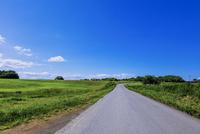牧草地の一本道