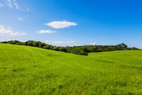牧草地と青空