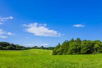 牧場と青空と雲