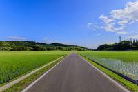 農道と水田と青空