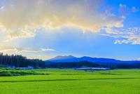 夏の稲田と夕方の雲