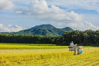 コンバインに乗り稲刈りする男性 10158007392| 写真素材・ストックフォト・画像・イラスト素材|アマナイメージズ