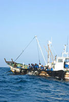 漁船の上で網を引き上げる漁師たち
