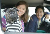 車で出かけるカップルと愛犬