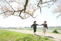 手をつなぎ土手を歩く小学生のカップルと桜