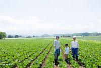 畑に立つ農家の三世代家族 10161004836  写真素材・ストックフォト・画像・イラスト素材 アマナイメージズ