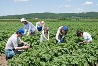 畑で作業する農家の三世代家族