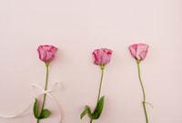 ピンク色のバラの花