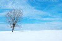 哲学の木と雪原