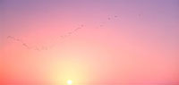 夕日と鳥の群れ