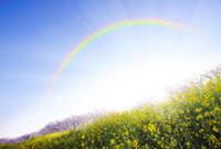 菜の花と桜と虹