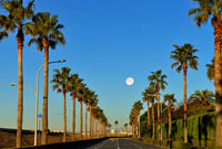 満月と舞浜のパームツリー