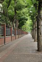 本郷通り歩道の並木道