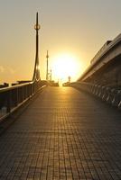 あけみ橋の夕日とゆりかもめ