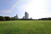 草原と虹と臨海副都心の高層ビル
