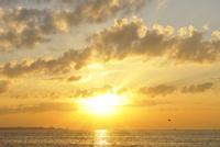 舞浜の日の出 10168002820| 写真素材・ストックフォト・画像・イラスト素材|アマナイメージズ