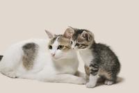 親猫と子猫