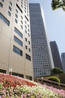 花壇と高層ビル
