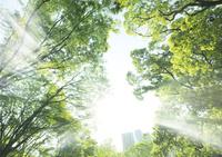 陽光と日比谷公園の新緑の木々