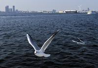 カモメと横浜港