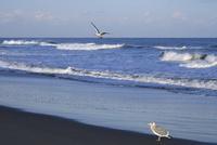 九十九里浜の白波と渡り鳥