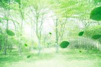 新緑の林と風に吹かれる葉