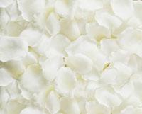 一面の白い花びら