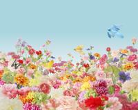 花と鳥 10169001353  写真素材・ストックフォト・画像・イラスト素材 アマナイメージズ