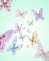 飛び交う蝶