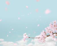 桜 10169001556| 写真素材・ストックフォト・画像・イラスト素材|アマナイメージズ
