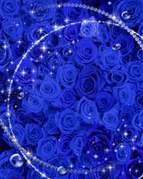 青いバラとフレーム