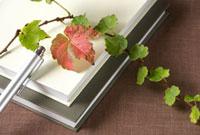 ツタと本とペン 10170000184| 写真素材・ストックフォト・画像・イラスト素材|アマナイメージズ