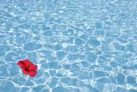 プール水面のハイビスカス