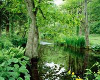 新緑の北大演習林