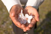 桜の花を持つ新一年生