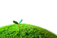 緑の惑星と新芽