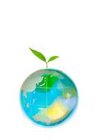 ガラスの地球儀から新芽 10172001492| 写真素材・ストックフォト・画像・イラスト素材|アマナイメージズ