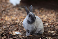 ウサギ 10172001901  写真素材・ストックフォト・画像・イラスト素材 アマナイメージズ