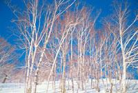 雪景色 10173002204| 写真素材・ストックフォト・画像・イラスト素材|アマナイメージズ