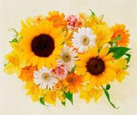 花のイメージ 10179001078| 写真素材・ストックフォト・画像・イラスト素材|アマナイメージズ