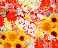 花のイメージ 10179001079| 写真素材・ストックフォト・画像・イラスト素材|アマナイメージズ