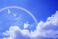 青空を飛ぶハトと虹