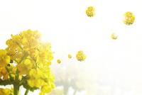 花から分離する花