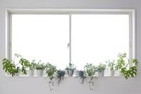 キッチンの明るい窓いっぱいの窓際に置いているグリーン