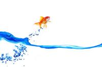 水面から飛ぶ金魚