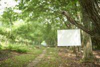 明るい森の中で木に吊るされた白いスケッチブック