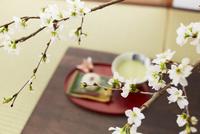 和室の桜と抹茶 10179007800| 写真素材・ストックフォト・画像・イラスト素材|アマナイメージズ