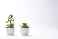 鉢植えのサボテンと多肉植物 10179008095| 写真素材・ストックフォト・画像・イラスト素材|アマナイメージズ